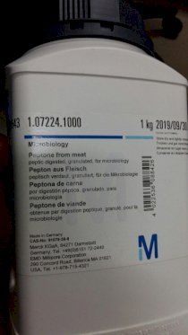 Peptone from meat peptic - 1072241000